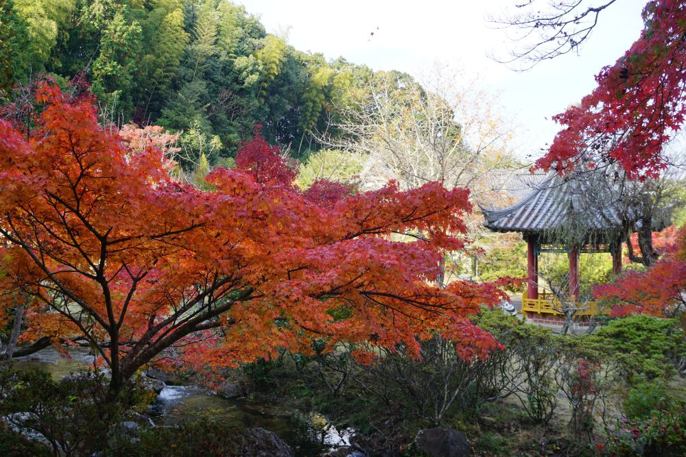 まきび公園 紅葉