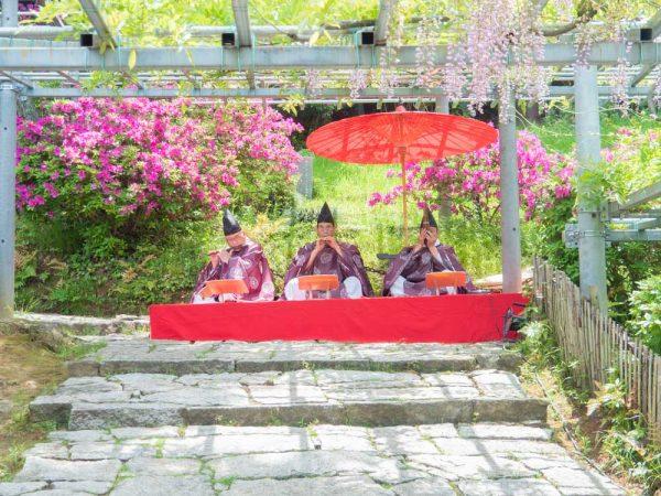 藤見の会(令和元年開催) 〜 阿智神社の日本一の「阿知の藤」と雅楽・茶席を楽しむ祭り