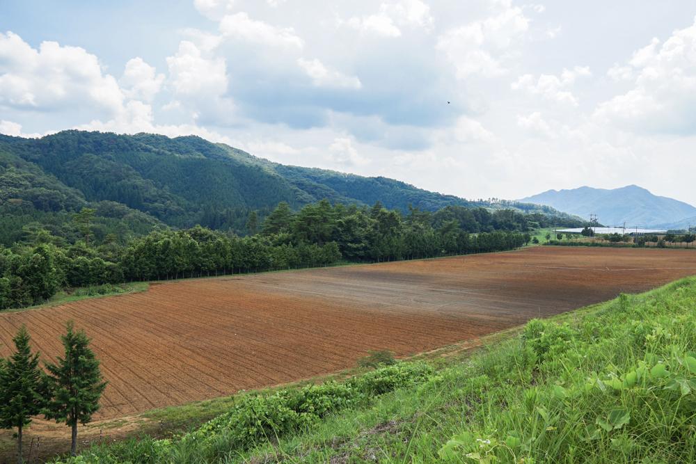 ぶどう畑風景5
